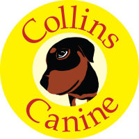 collins canine
